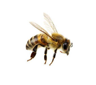 Save the Honey Bees. Bee removal should be safe for honey bees no matter the issue.