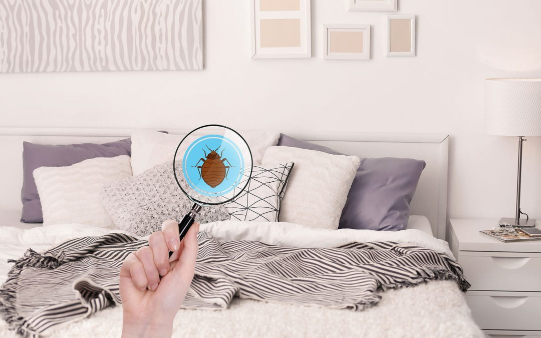 How to Avoid Bed Bugs While on Vacation