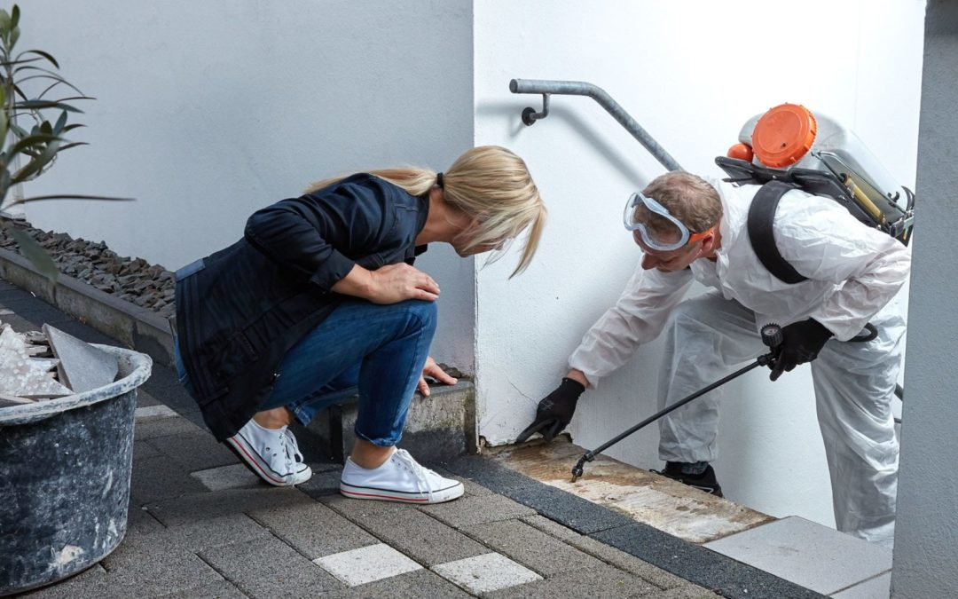 Pest Control Advice When Purchasing a New Home