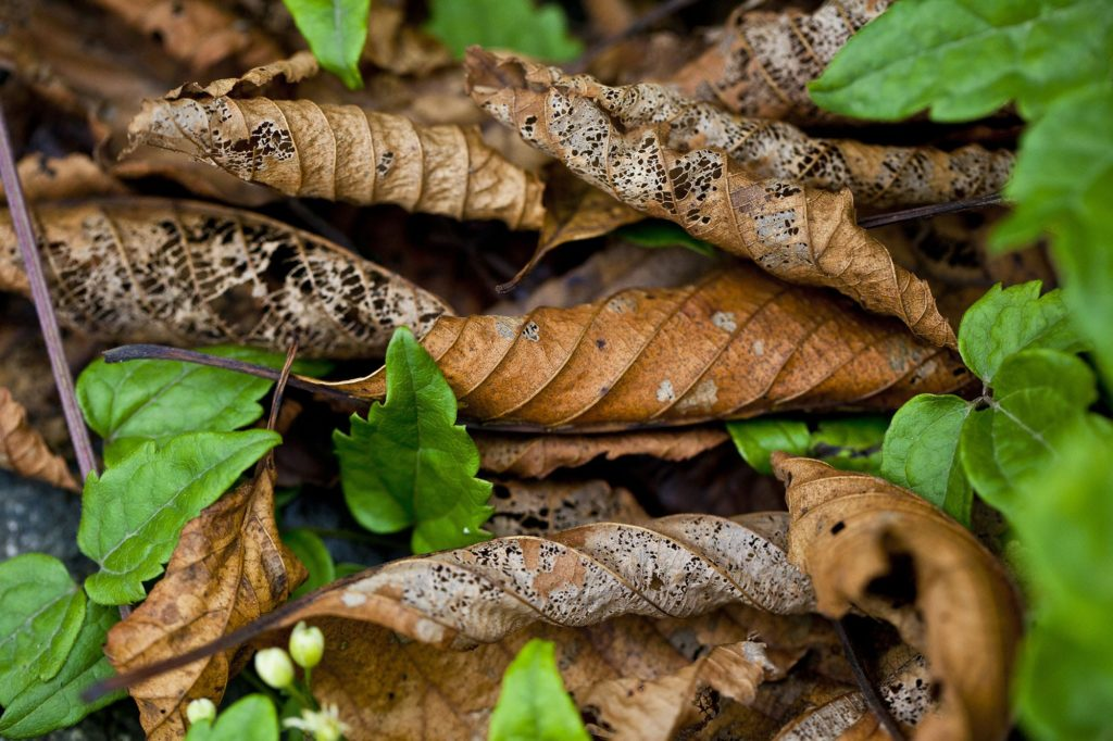 Fall pest control often includes looking to dried leaves.