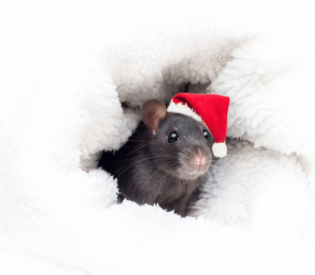 A mouse with a Santa hat in a white blanket. Part of winter pest control is making sure no critters are scurrying.