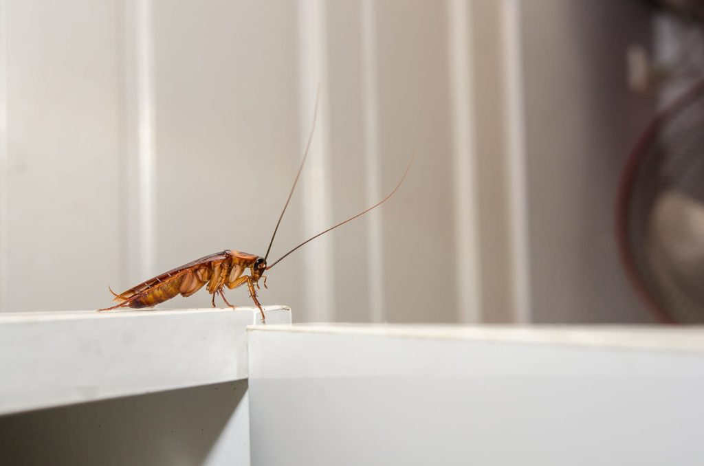 Cockroaches are one of history's longest living bugs. But what makes them so special? A cockroach on a door frame.