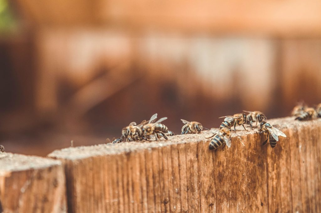 Learning how pests get inside is vital to controlling infestations. Bees gathering on a wood plank.