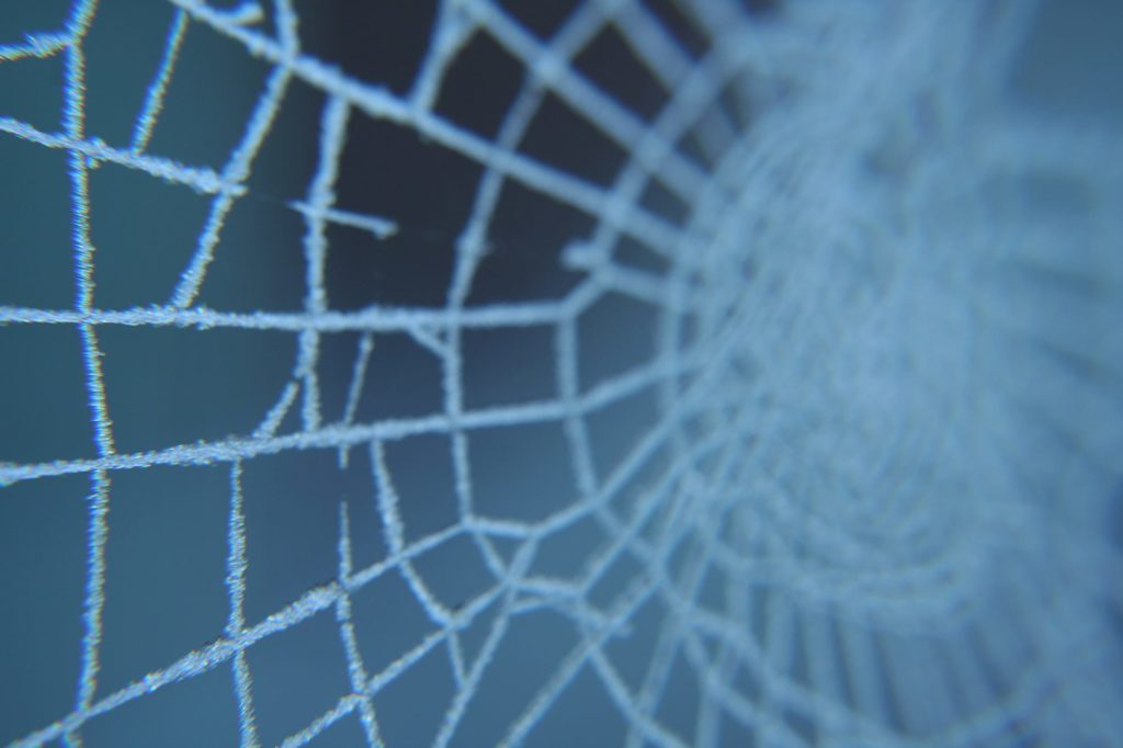 House spiders grow and live inside your house, so don't confuse frosted spiderwebs fro indoor creatures.