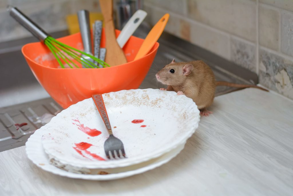 Some critters, like mice looking for food out in the open, need better help understanding how to identify household pests