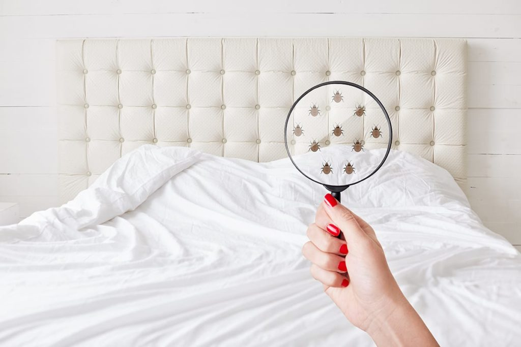 Bed bug pest control is hard to do on your own, as the creatures are of the smallest to see with the naked eye. A woman holds up a magnifying glass to her bed to reveal several bed bugs.