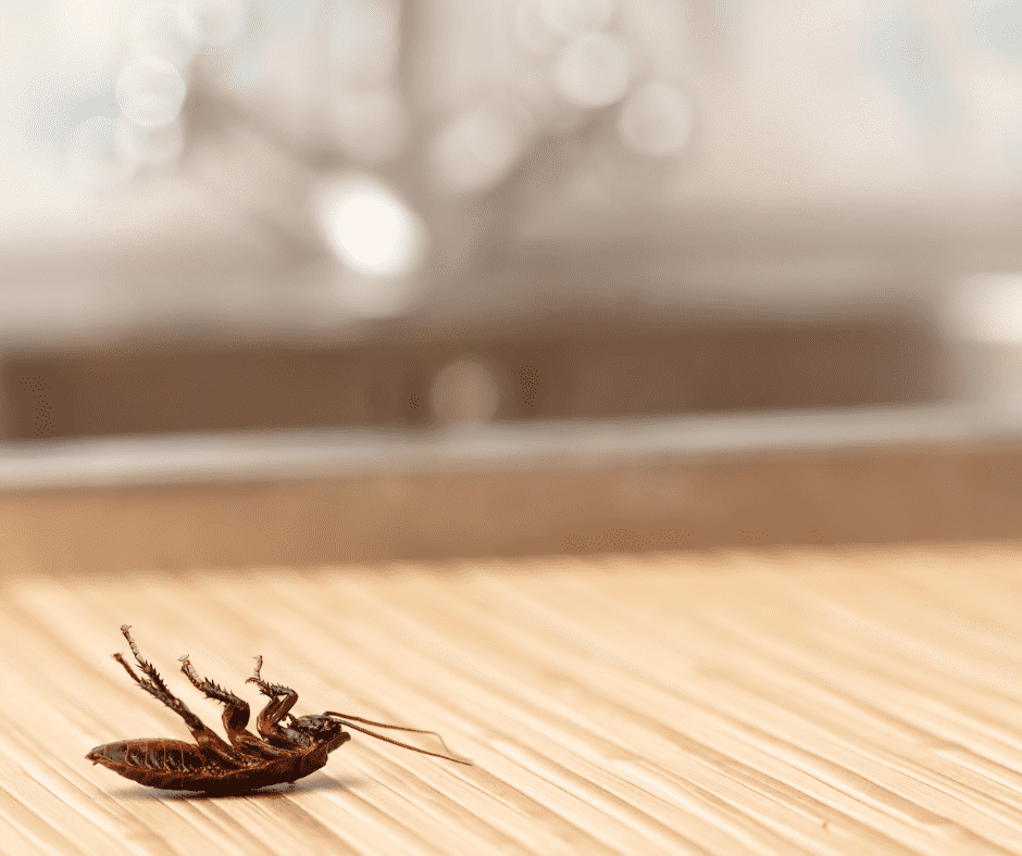 A pest inspection is important when buying a house.