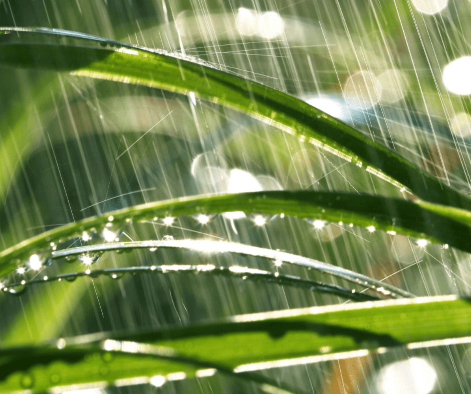 Insects in the rain behave differently.